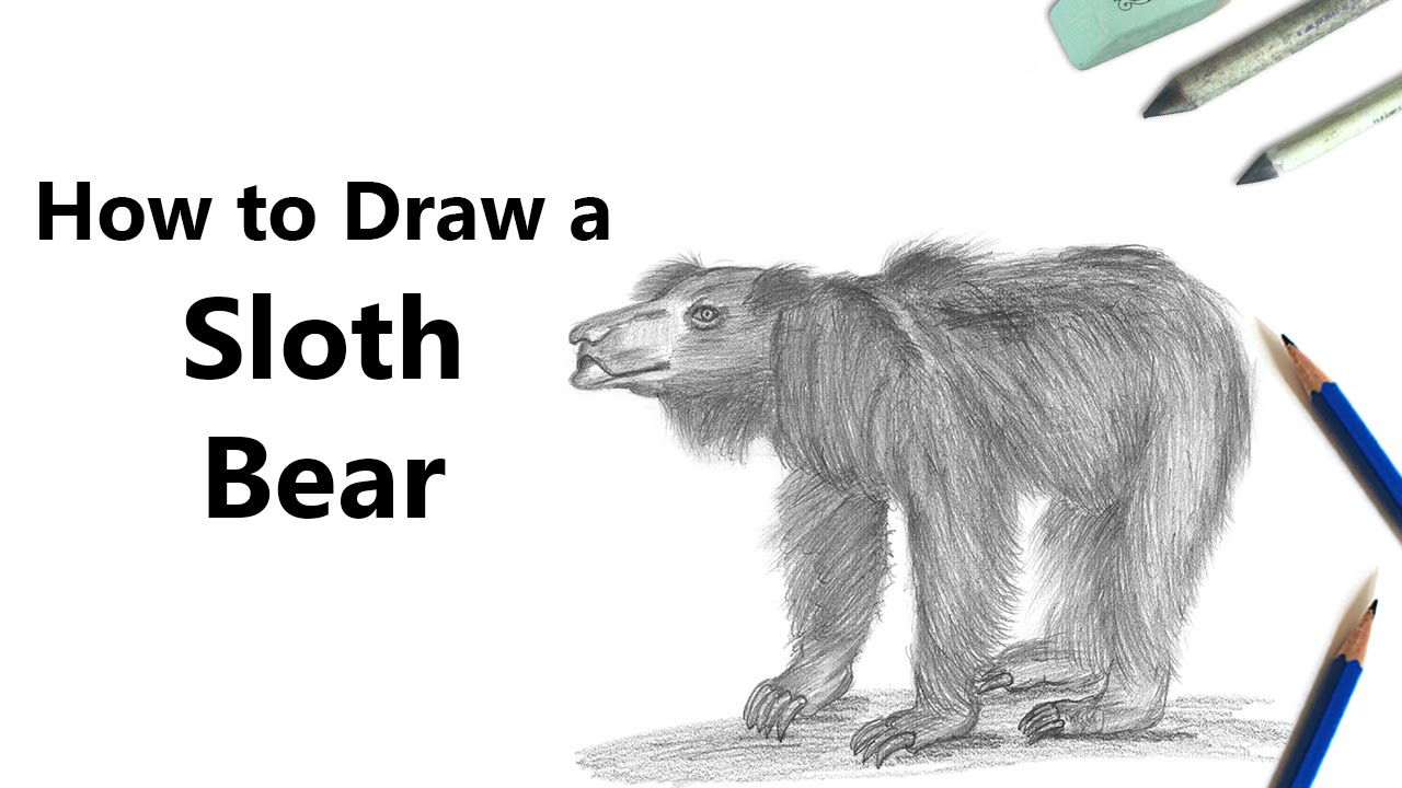 how to draw a sloth bear with pencils time lapse