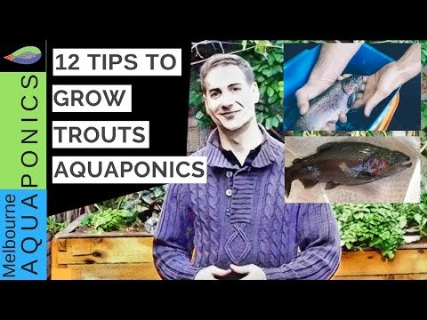 How To Grow Trout In Aquaponics