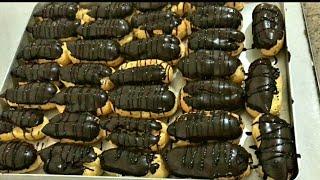 Ustasından Ekler Yapımı   Pastane Usulü Çikolatalı Ekler Tarifi