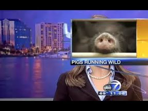 BEST NEWS FAILS || FUNNY NEWS BLOOPERS