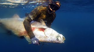 Spearfishing for Mulloway / Jew fish on offshore reefs and pinnacles