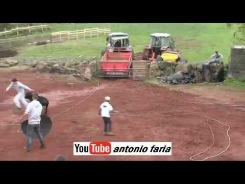 Ganadeiro Lino Oira Apanhado pela féra 01 Novembro