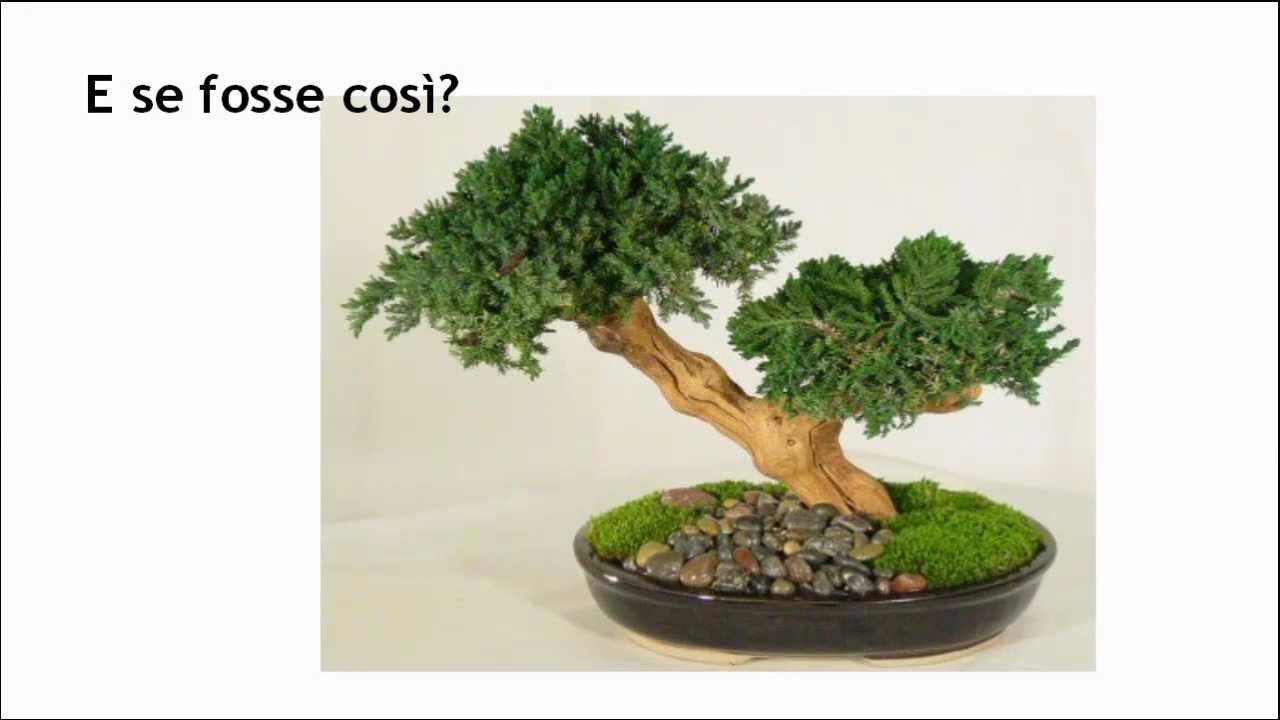Cura bonsai youtube - Cura dei bonsai in casa ...