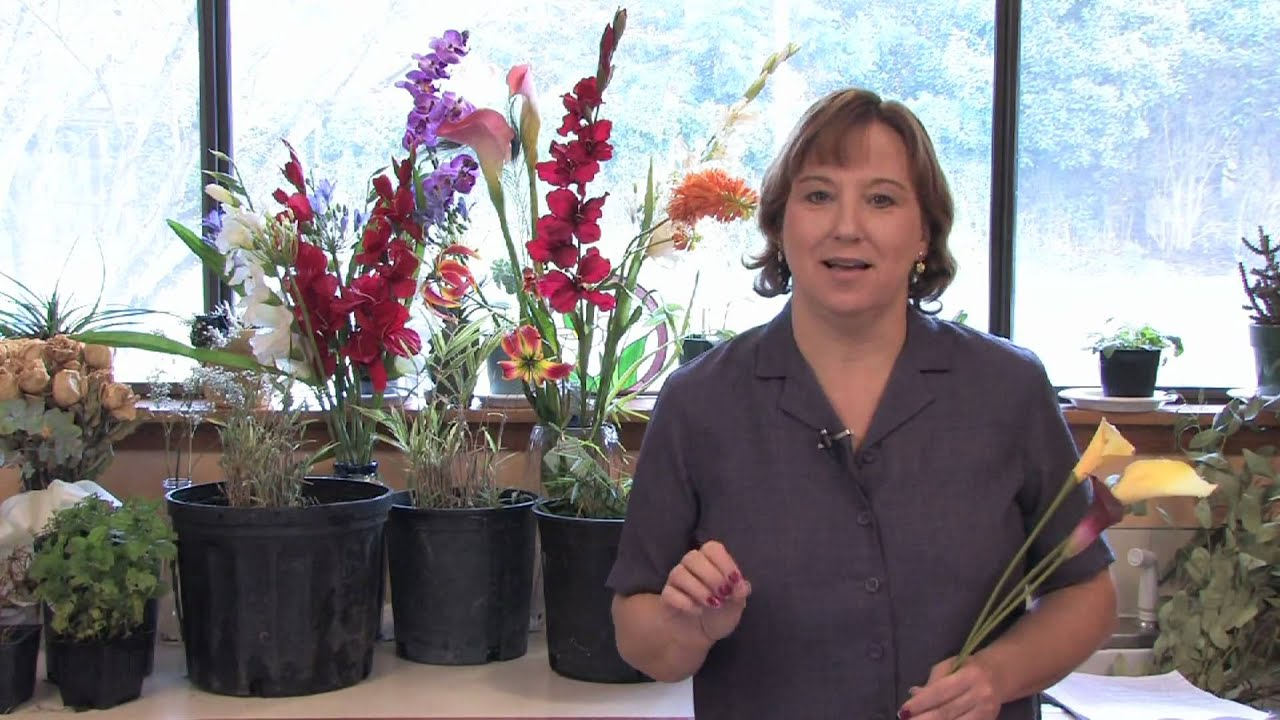 Gardening lessons about the calla lily youtube izmirmasajfo
