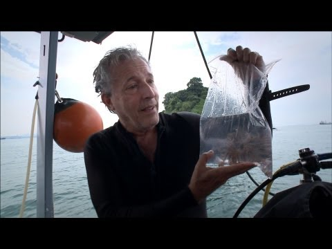 Diving for treasure, Singapore-style