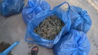 видео О сортах грузинского винограда