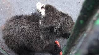 #Родники Ленобласти в  центре реабилитации диких животных «Велес»