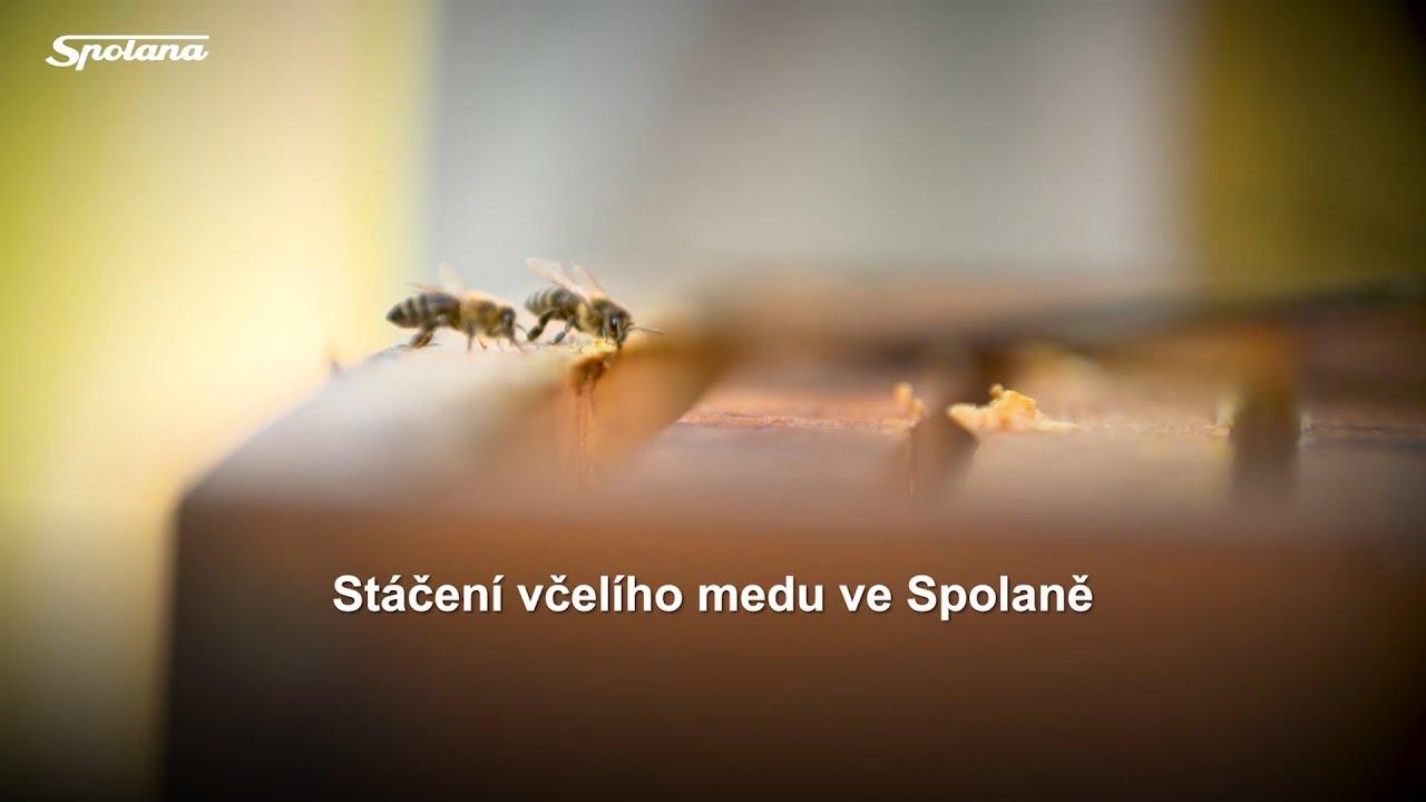 Stáčení včelího medu ve Spolaně - Neratovice | 6. srpna 2018