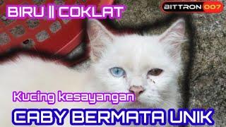 Download lagu KUCING MATA UNIK  CABY || LAMA TAK JUMPA GRAY DAN BABY ||