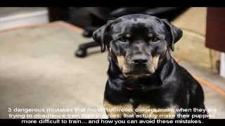 Rottweiler Puppy Training Guide Chart