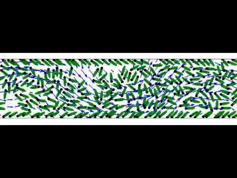 Micro-swimmers collectively organize inside a channel