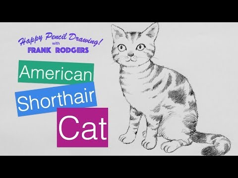 How to Draw a Pencil Sketch of an American Shorthair Cat  - Illustration Live with Frank Rodgers