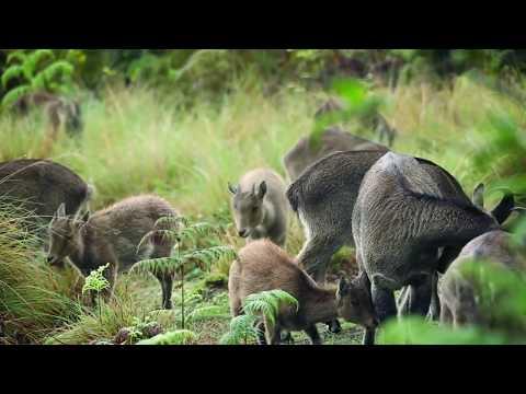 Munnar Oxy Valley Gardens