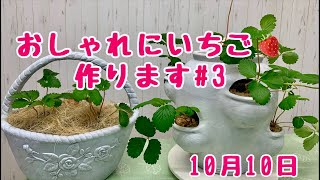 2019年10月10日ライブ配信 おしゃれに苺(あきひめ、アイベリー)作りま...