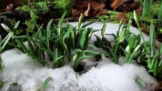 Красивое,лучшее,трогательное поздравление с 8 марта! Для милых дам!