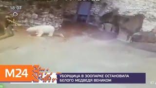 Уборщица зоопарка остановила белого медведя веником - Москва 24