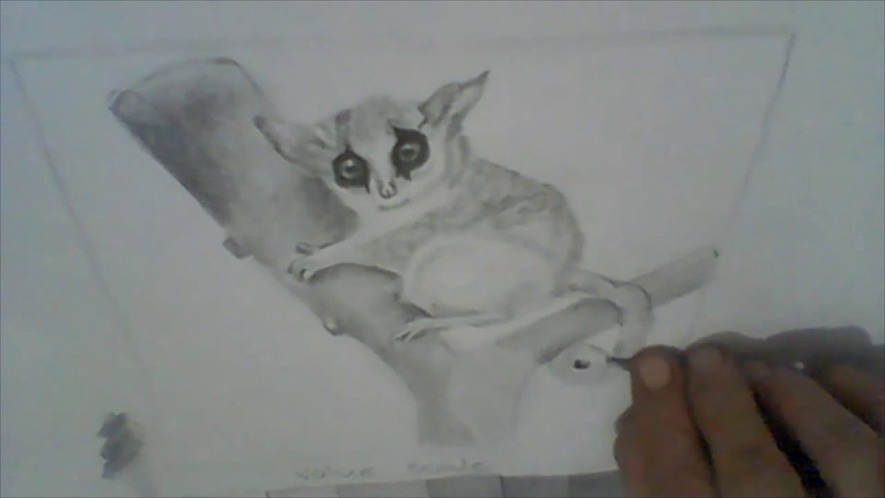 How to draw a bush baby - YouTube