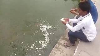मछली को दाने खिलाने से शान्त होते है यह ग्रह।।।