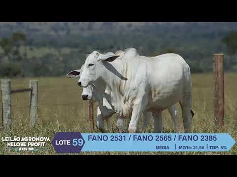 LOTE 59 FANO 2531 X 2565 X 2385