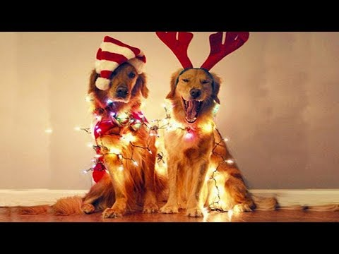 FUNNY The most Excited Dog For Christmas |  Funny Pets Compilation