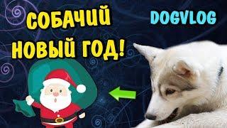 НОВЫЙ 2019 ГОД! ОТКРЫВАЕМ ПОДАРКИ! Говорящая собака