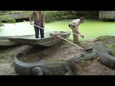 How to Feed a Gator | The Real Wild Animals of New Orleans