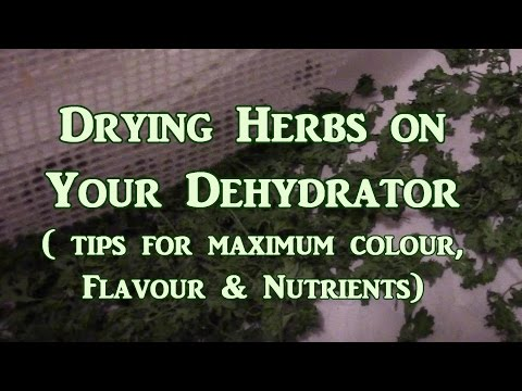 Drying Herbs On the Dehydrator What You Need To Know
