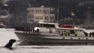 7.29.15 Humpback Whales #Monterey #Travel #Adventure