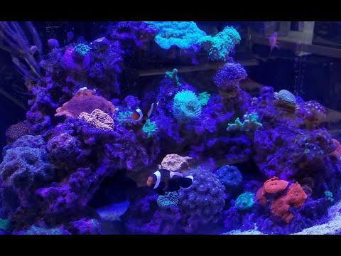 Bob's Tropical Fish