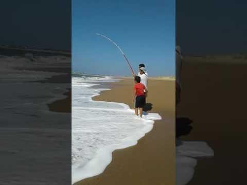 Pesca de corvina negra Lucas Antonini