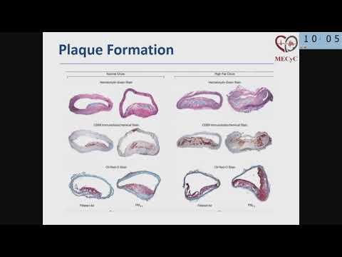 28. Conrado Estol: Air Pollution and Cardiovascular Disease, A Proven Causality