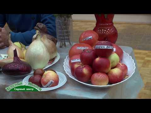 Особенности обрезки яблони сорта Краса Свердловска