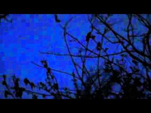 Nature at night London