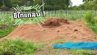 เกษตรไทยไอดอล I EP.104 ตอน ผักรวมพลัง 5 มิ.ย.60