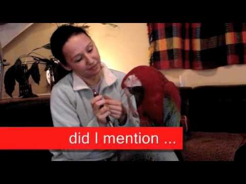 Parrot Training & Taming: Greenwing Macaw has Beak Groomed with Dremel
