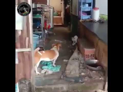 Viral Un Perro Y Un Gato Se Unen Para Atrapar Una Rata Gigante Youtube