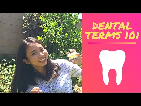How To Name Teeth - Dental Terms 101 || Brittany Goes To Dental School