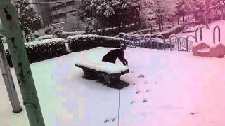 ヴィッツが初めて踏みしめた雪!食べれるか挑戦してます!