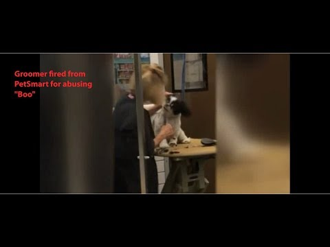 Violent Groomer Fired From Petsmart Caught On Tape Abusing Boo Youtube