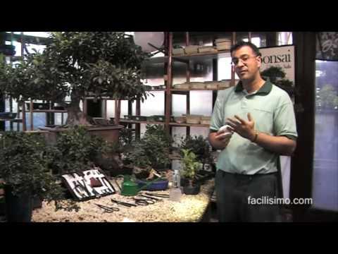 Jardiner a f cil herramientas para el cuidado del bons i - Herramientas para jardineria ...
