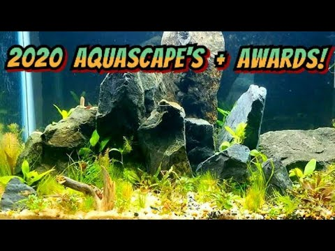 2020-aquascape-contest-entries-&-winners!