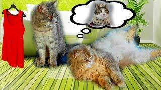 ЭТА КОШКА - НАСТОЯЩАЯ ЖЕНЩИНА. Приколы с котами с озвучкой.