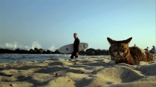 Repeat youtube video BUB GOES TO THE BEACH