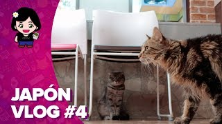 ChicaGeek en Japón #4 - Visita a un cat café (neko café)