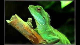 top 10 best reptile and amphibian pets