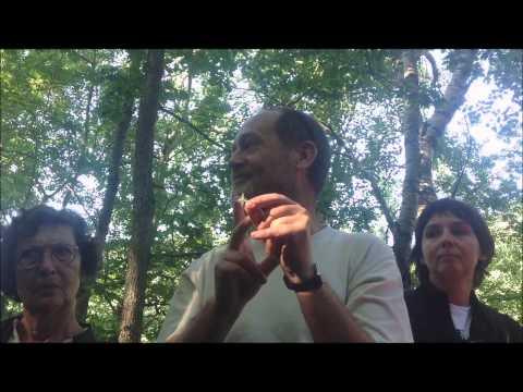 El camí de Rus: la vall de Riqüerna i la flora d'alta muntanya
