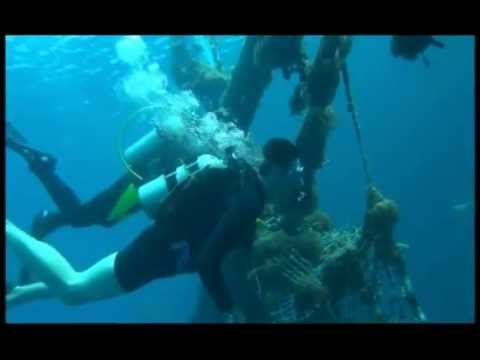 red sea diving