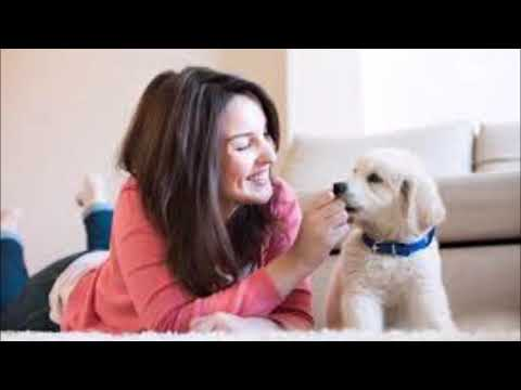 Cleaning Service For Pet Owners And Cost Albuquerque NM | ABQ Household Services (505) 225 3810