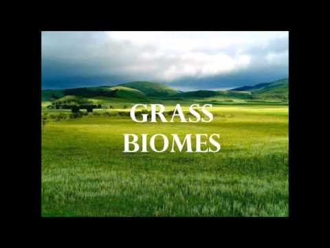 Introduction to Grassland Biomes