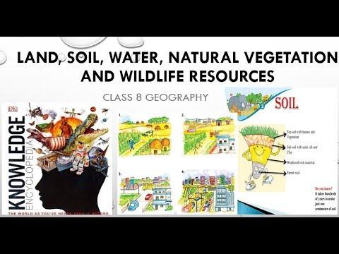 effects of vegetation on soil